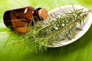 Польза масла чайного дерева
